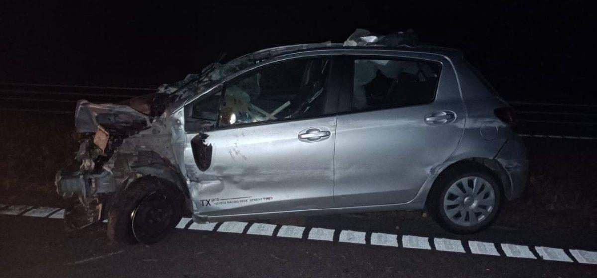 Toyota сбила лося под Бобруйском, пострадал водитель