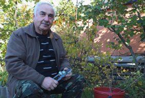 Как садовые вилы помогут избавиться от мучнистой росы и огневки на крыжовнике