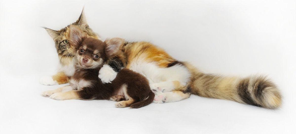 Зверье мое. Что находят в желудках у котов и какие операции доступны животным в Барановичах?