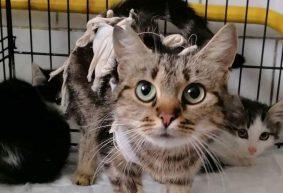 Как реализуется новый способ борьбы с бездомными животными в Барановичах?