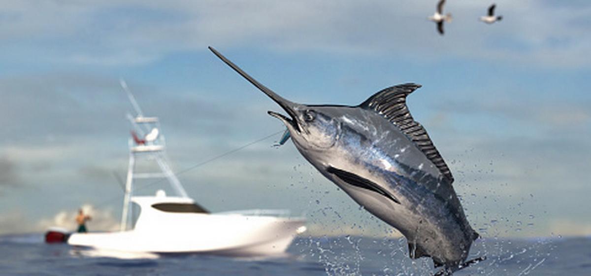 Интересные факты. ТОП-5 рыб, которые плавают быстрее всех