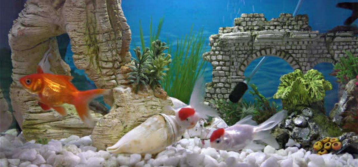 Интересные факты. Какие аквариумные рыбки являются самыми дорогими в мире