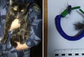 Кот пытался пронести марихуану в колонию, полицейского осудили за сон на работе. Что происходит в городах-побратимах Барановичей