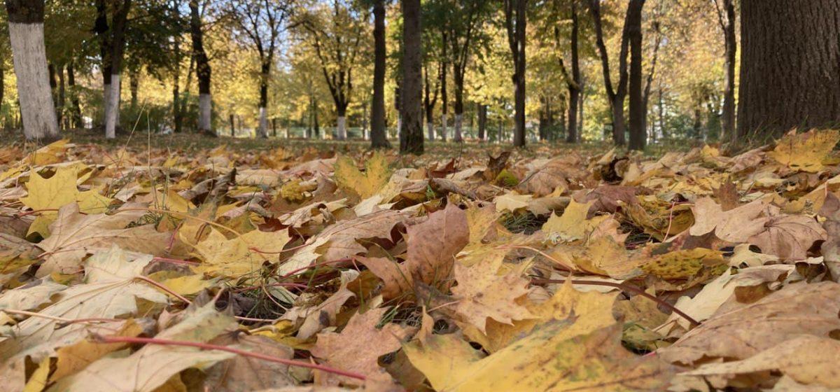 Станет ли теплее в Барановичах? Прогноз погоды на 4 октября