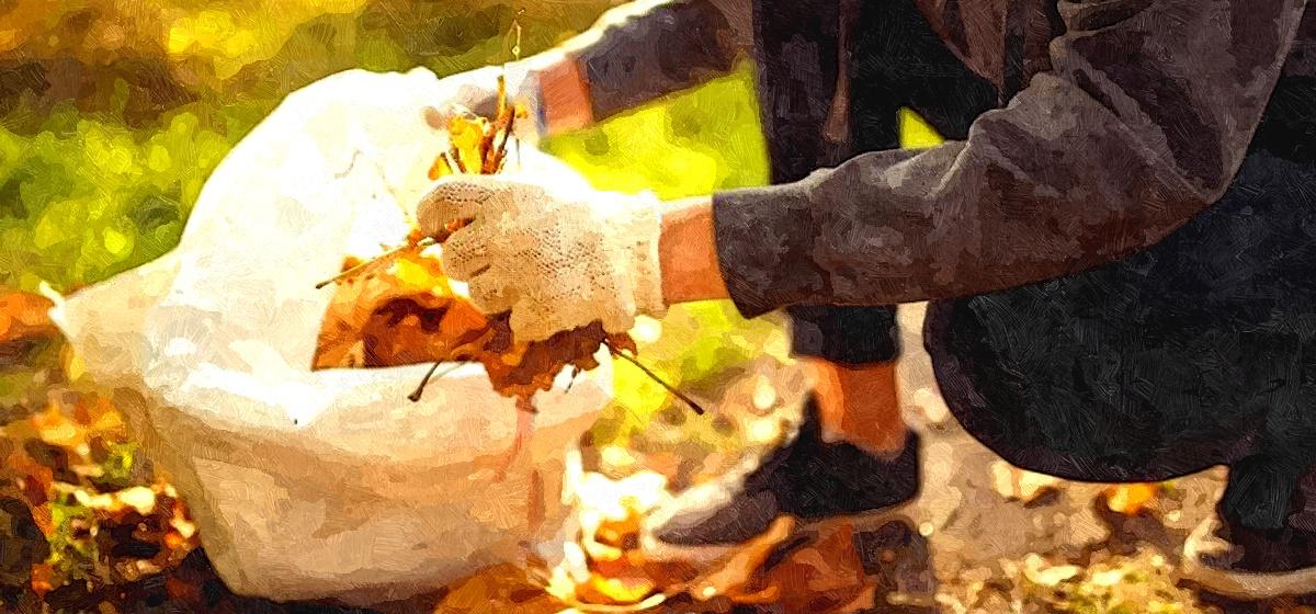 ТОП-9 идей, что делать с опавшими осенью листьями